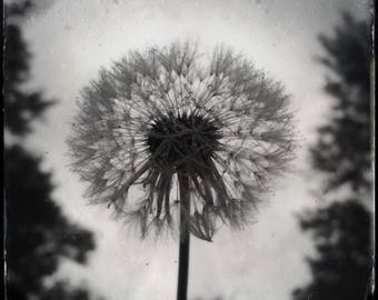 Last of the Light. Photograph, Art Print, Art, Photography, For Home, Wall Art, Wall Decor, Flower, Nature, Exquisite, Obscura.