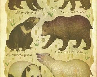 Bears - A4 art print