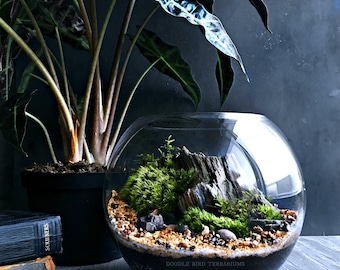 Custom Living Landscape Terrarium with Petrified Wood Specimen and Live Plants