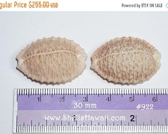 Set of 3 pairs  brown Granulate Cowrie shells #922-924-925