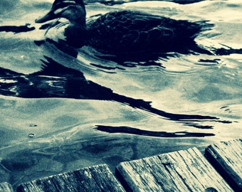 Grainy duck black and white photography