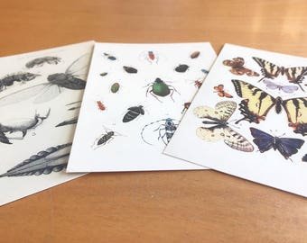 Earth day. Vintage Scientific Illustration Postcards  Entomology - SET OF 3 - beetles (coleoptera), butterflies / moths, cicada Insect Art