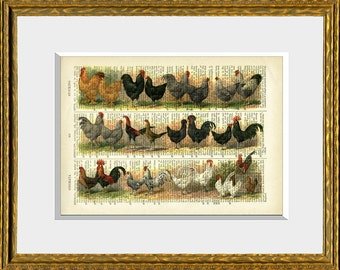 CHICKENS  Dictionary Art Print - upcycled antique dictionary page with a retooled antique poultry illustration - vintage wall art