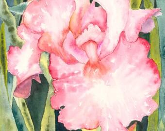 Pink Iris Watercolor Print (Full Frame)