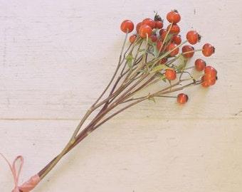 SALE Winter Berries - Fine Art Photograph