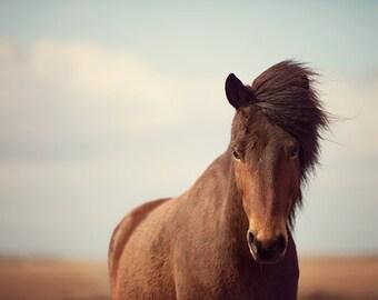 Icelandic Horse Photography, Rustic Nature Photography, Horse Art, Farmhouse Wall Decor, Brown Horse Wall Art - Dalla's Glance