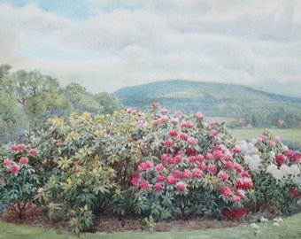 Antique Framed Book Plate, Landscape with Rhododendrons by Beatrice Parsons, from Walter P. Wright's 1913 Garden Trees and Shrubs Book