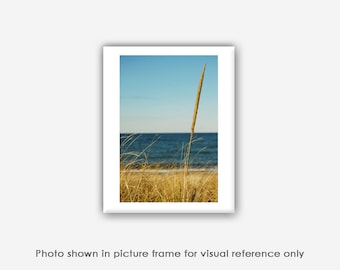 Cape Cod Photo, Seagrass Photographs, Prints, Blank Photo Greeting Card, Note Card, Teal Blue Ocean Beach Nature Photography Card Set
