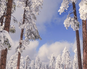 Winter Wonderland, Frozen, Forest, Winter, Trees, White, Landscape Photo, Digital Download
