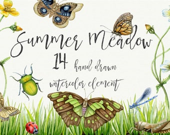 Summer Meadow watercolor set. Watercolor butterfly. watercolor bugs. Meadow flowers.