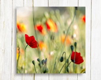 Wild flower nature photography print on canvas - Nature photography - canvas print - home and living - housewarming gift idea