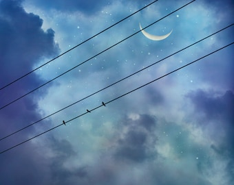 Image result for birds on a wire blue dusk
