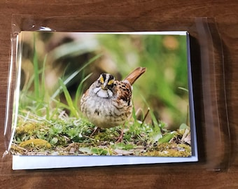 Bird Note Cards, Sparrow note cards, single-sided blank note cards, greeting cards, post cards, 8 photographic note cards, stationery