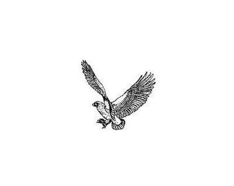 HAWK unmounted bird rubber stamp, bird of prey, coming in for the kill, wildlife, Sweet Grass Stamps No. 9