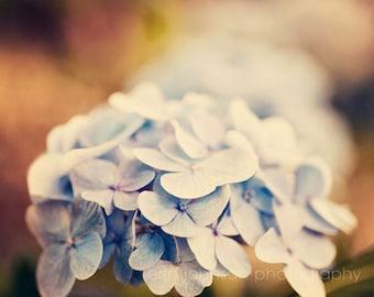 flower photography, rustic farmhouse cottage chic, rustic art, blue home decor, country rustic decor, floral art, Blue Hydrageas