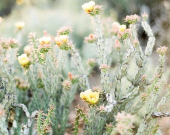 Cactus print, cactus fine art print, cactus with yellow flowers, desert photo print, Arizona print, Southwestern decor