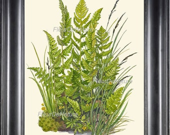 Botanical Fern Art Print 5 Antique Beautiful Green Ferns Summer Beautiful Forest Country Field Nature Living Room Home Wall Decoration