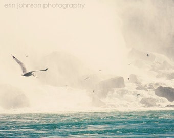 bird photography niagara falls ontario canada aqua blue wall art home decor fine art photograph Seagulls in Flight