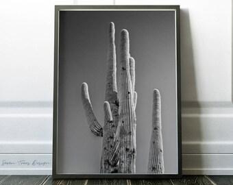 Modern Cactus Print, Black And White Cactus PRINTABLE art » Modern Cactus Photo » Cactus Digital Print » Cactus Photo » Plants Art Print