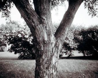 Tree digital print