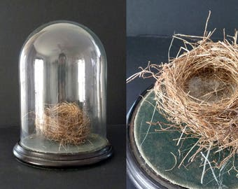 Antique Glass Dome Display Cloche with Wooden Base and Nest Naturalist Decor Curiosities