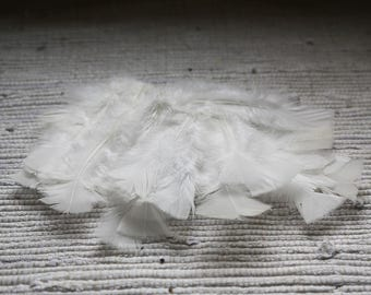 Decorative feathers 5 gr (20-24 feathers). White feathers. Feathers for dream catcher. For dolls. For plush toys.
