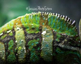 Reptile Noise Canvas Photograph Size - A2, A3 + A4.