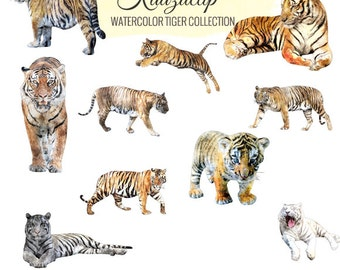 Watercolor Tiger Collection - Commercial and Personal Use