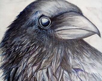 Watercolour Crow Print