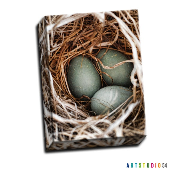"""Blue Teal Tan - Robins Egg Nest - 6""""x6"""" to 36""""x36"""" - 1.25 Thin Bar Gallery Wrapped Canvas - artstudio54"""