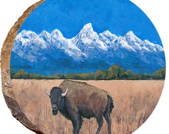 Teton Buffalo Standing in Dried Grass - DAU031