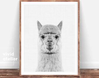 Alpaca Print, Woodlands Nursery, Black and White Animal Print, Printable Woodlands, Alpaca Photo, Baby Woodland Decor, Wall Art Prints