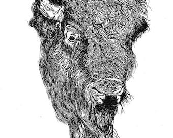 Bison Head Study - Print (8.5x11)