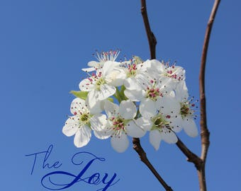 NATURE photography, joy of the lord, wall art, home decor