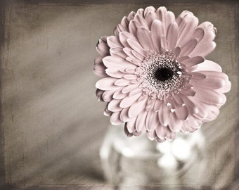 Macro Photography flower Pink Shabby Chic home decor wall art romantic pale soft peach black texture Gerbera Daisy vintage inspired photo