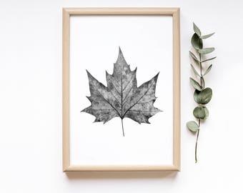 Maple Leaf  Botanical Printable Art  Plant Printable Art  Rustic Fall Decor  Minimalist Poster  Farmhouse Decor  Fall Decor  Autumn Decor