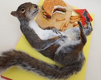 "Taxidermy ""stuffed"" squirrel with faux fast food"