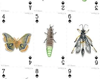 Insect Deck - Playing Cards