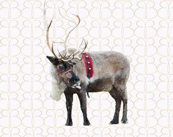 Just Clowing Around Reindeer + Bonus Christmas Tree Farm Background!