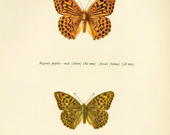 Vintage Butterfly Color Book Plate Sale, Buy 3 get 1 Free