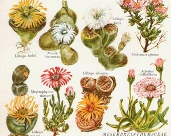 Botanical CACTI Flower Print 60 Flower small artwork cactus plants print Cottage Decor Wildflowers Vintage Botanical Print 1960s