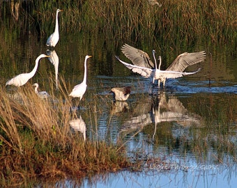 Birds of the Glades