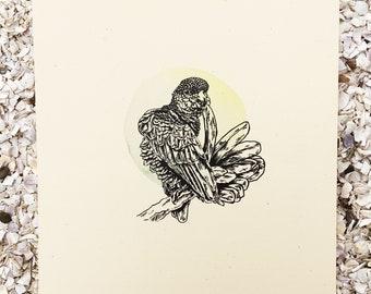 Small Parrot - Bird Series
