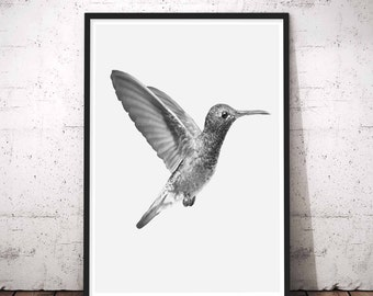 Hummingbird Tropical Forest Art Decor, Black and White, Nature Wall Art, Travel Photo, Nursery Wall Art, Printable Art, Digital Download