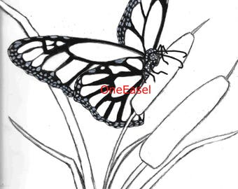 color-in butterfly