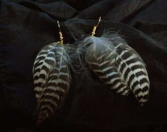 Striped Feather Earrings