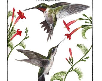 Ruby Throated Hummingbirds, Card by Renae Taylor
