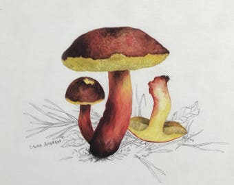 Mushroom PRINT in mount 37x37 By Laura Andrew - Red-Cracked Boletus Toadstool ART