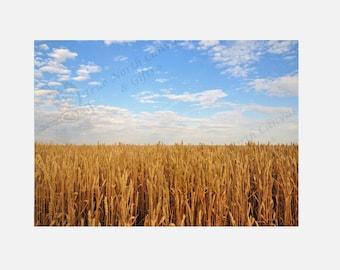 "Wheat, Field, Blue Sky, Clouds, Fine Art Prints ""Saskatchewan Wheatfield"" Original Photography"