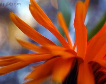 Flower petals- Fine Art Photography - Photography Print , macro photography, flower photography, Wall decor, floral decor